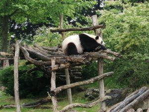 Panda Beauval - Chambres d'hôtes
