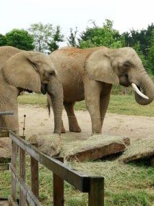 Elephants Beauval - Chambres d'hôtes