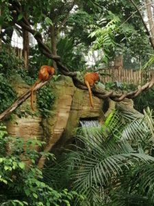 Végétation Singe Dome Beauval - Chambres d'hôtes